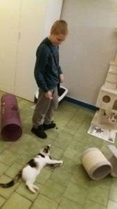 Koty wolontaroiat 3