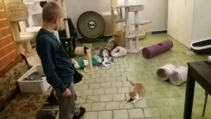 Koty wolontaroiat 4