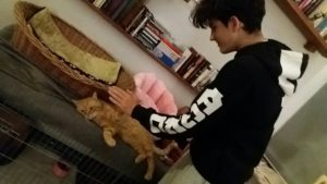 Koty wolontaroiat 8